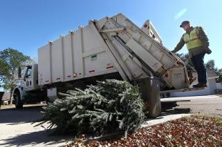 christmas-tree-cleanup